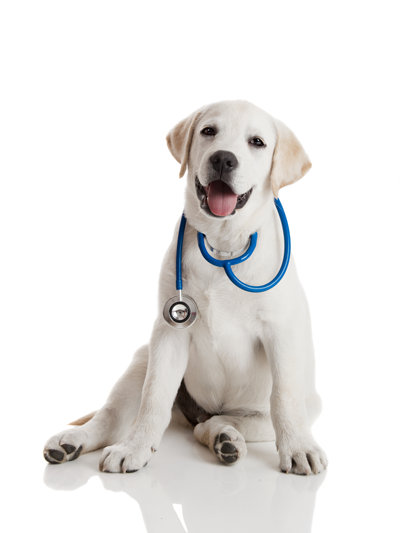 dog vaccine information form
